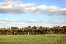 Insgesamt 19 Weingüter gibt es in der Region