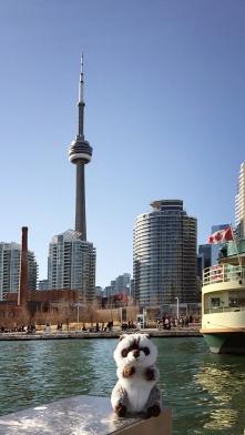 Waschbär in Toronto